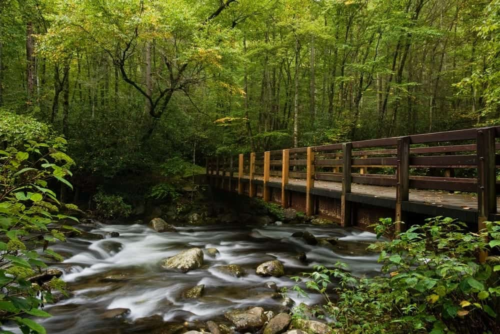 Top 5 Things to Do in the Smoky Mountains for Nature Lovers