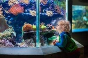 toddler watching fish at the aquarium